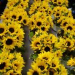 corporate_yellow