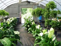greenhouse rental